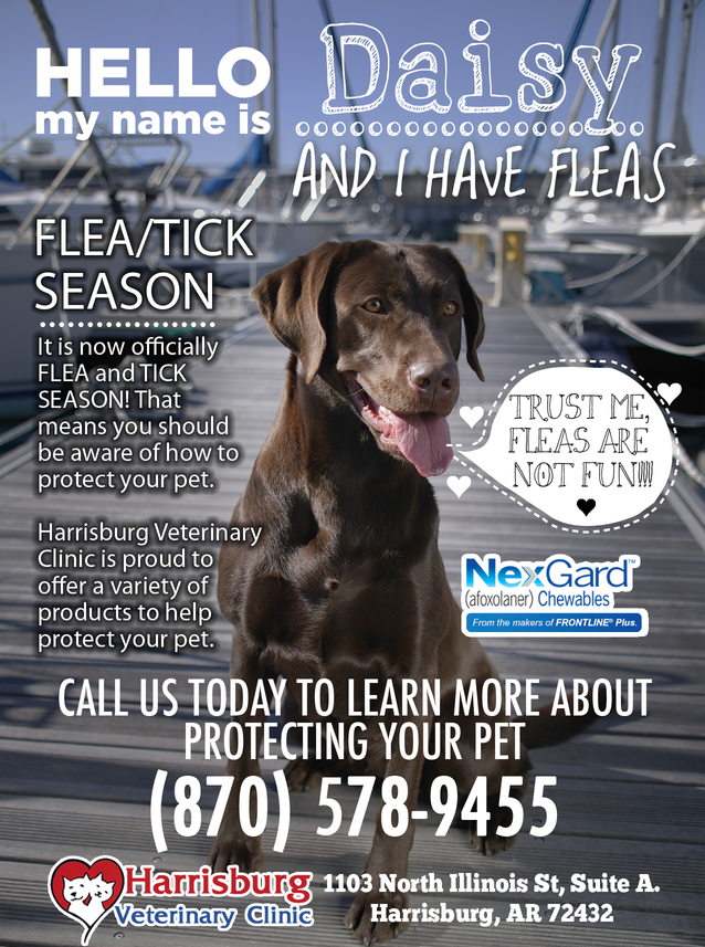It's Flea and Tick Season!